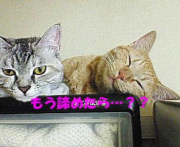 画像2006_1004(006)�B.JPG