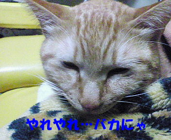 画像2007_0128(012)�B.JPG