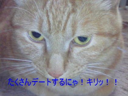 画像2008_0426(002)�B.JPG
